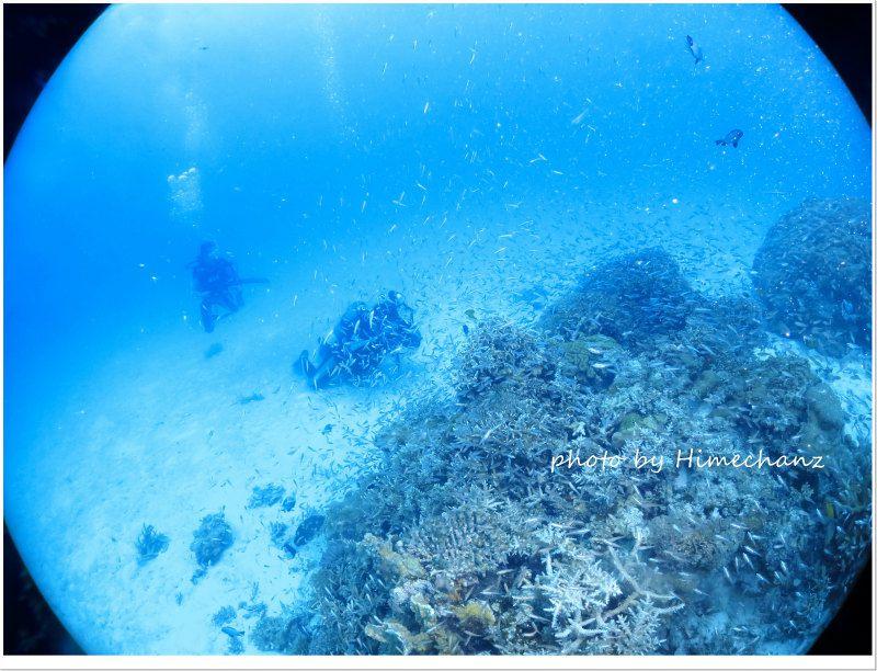 グルクン幼魚の群れ photo by CANON PowerShot S100