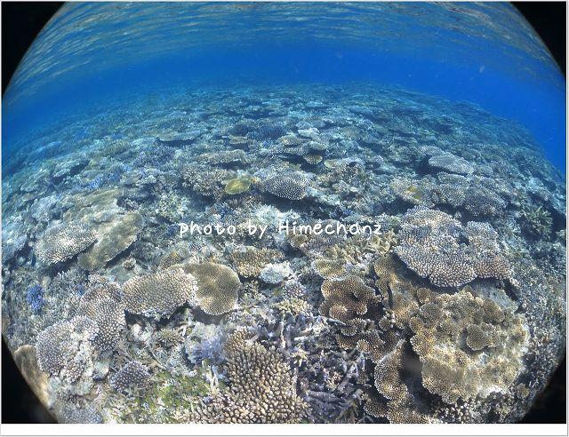 どこまでも続くサンゴ畑! 天気も透明度も最高やった~! photo by CANON PowerShot S100