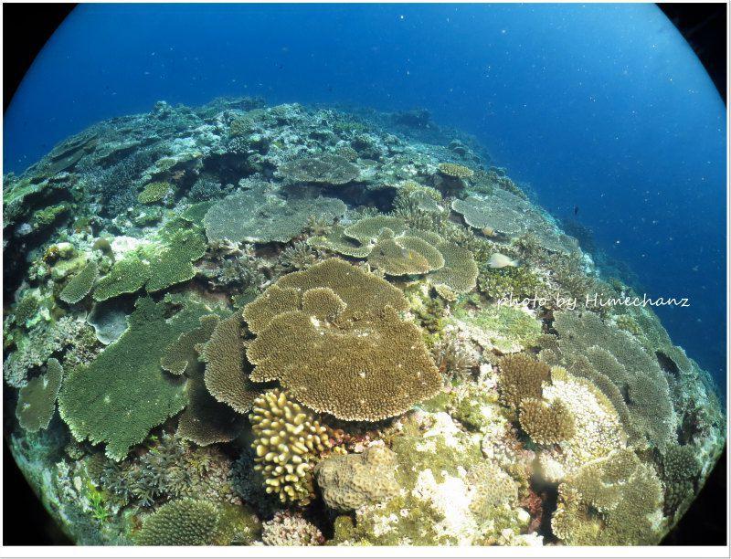 嘉弥真島のサンゴもキレイだ! photo by CANON PowerShot S100