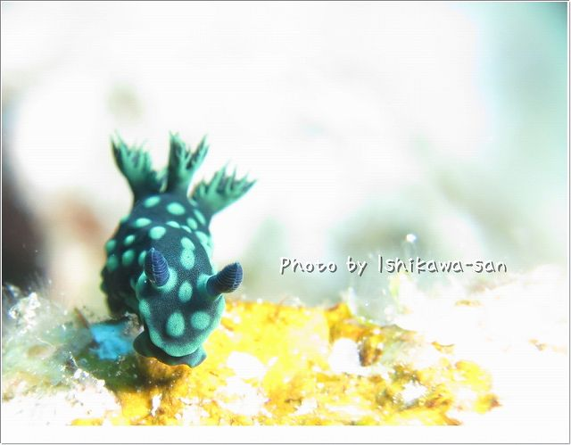 トサカリュウグウウミウシ Photo by CANON PowerShot S100