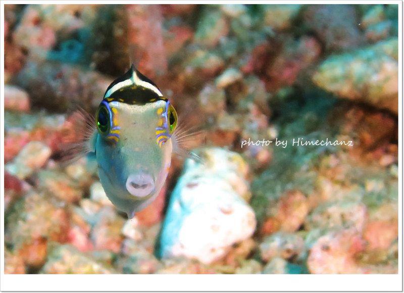ノコギリハギの正面顔w photo by CANON PowerShot S100