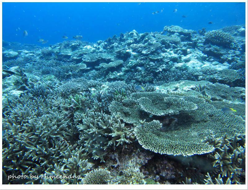 嘉弥真島のサンゴたち photo by CANON PowerShot S100