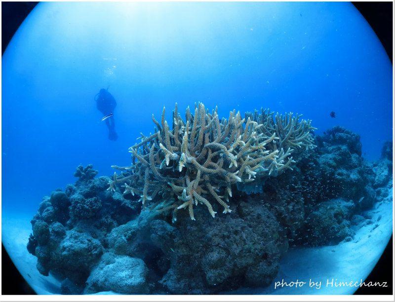 黒島にも立派なサンゴが! photo by CANON PowerShot S100