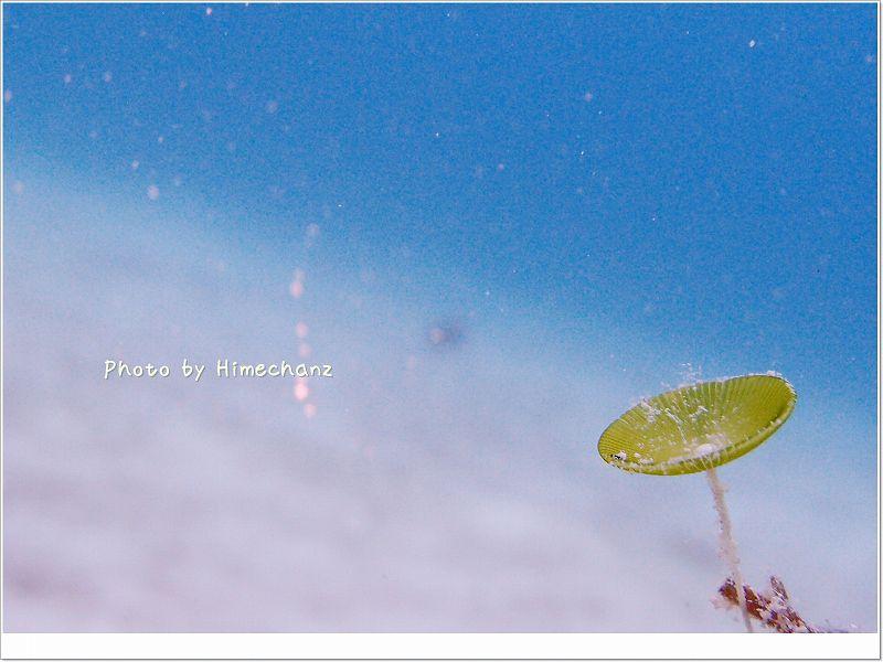 かわいい藻が生えていました。 photo by OLYMPUS XZ-1