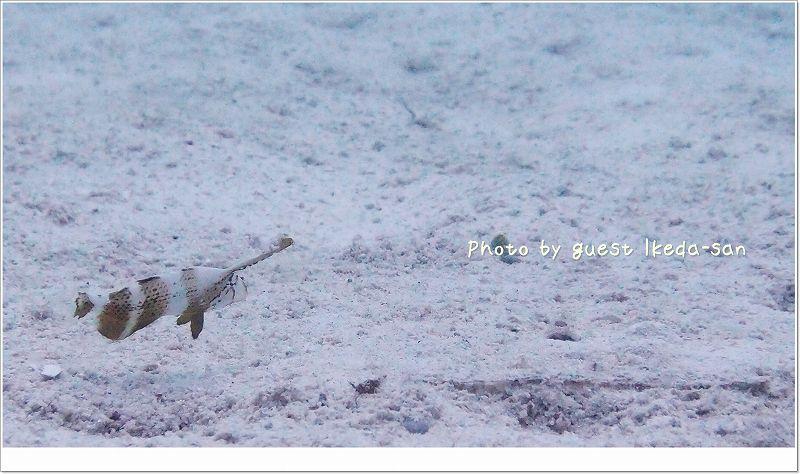お気に召したそうです。ホシテンス幼魚 photo by OLYMPUS XZ-1