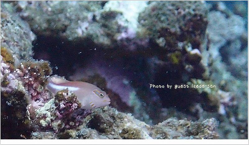 メガネゴンベ photo by OLYMPUS XZ-1