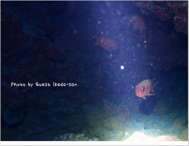 スポットライトを浴びるアカマツカサ photo by OLYMPUS XZ-1