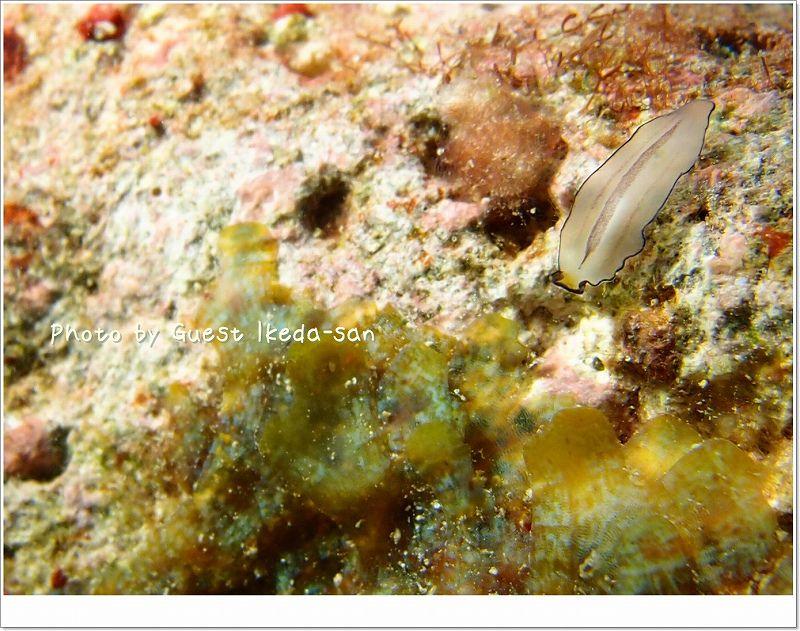 透明なヒラムシ photo by OLYMPUS XZ-1