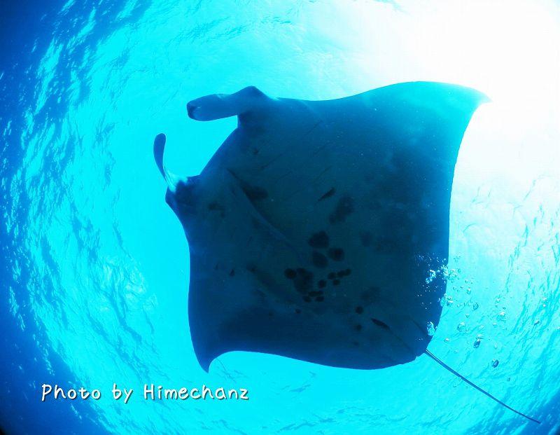 サンゴモドキ20121025 MCPにて