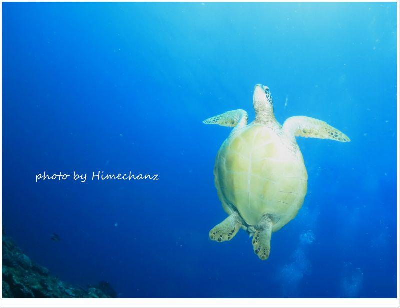 水面へ息継ぎしに行っちゃいました photo by CANON PowerShot S100