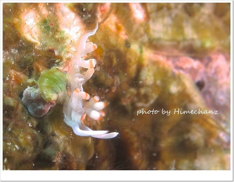 サキシマミノウミウシ photo by CANON PowerShot S100