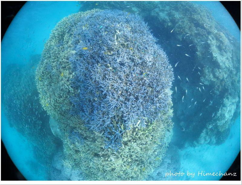 キンメモドキの群れがいなくてちょっと淋しい浜島東のメインの根 photo by CANON PowerShot S100
