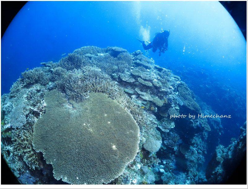 やっぱここのサンゴ礁が日本一な気がしますw photo by CANON PowerShot S100