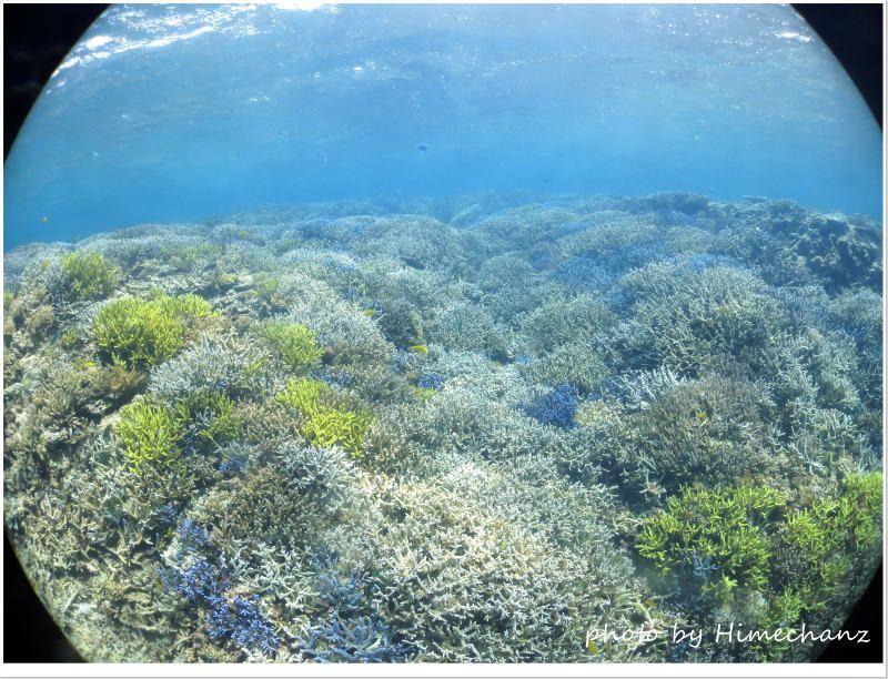 小浜島のサンゴもえぇで! photo by CANON PowerShot S100