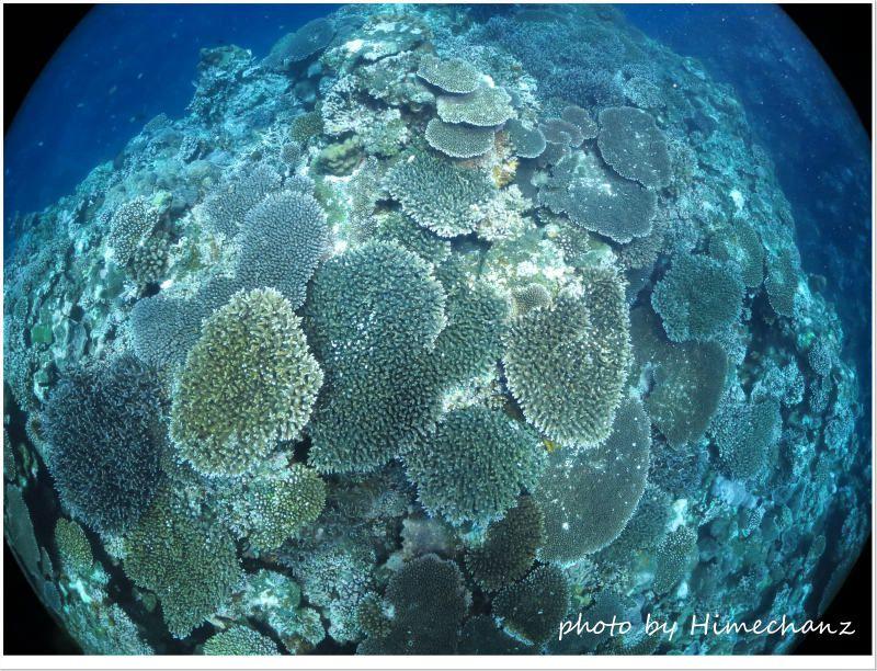 嘉弥真島の極上サンゴ♪ photo by CANON PowerShot S100