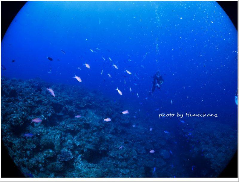ハナゴイの群れ photo by CANON PowerShot S100