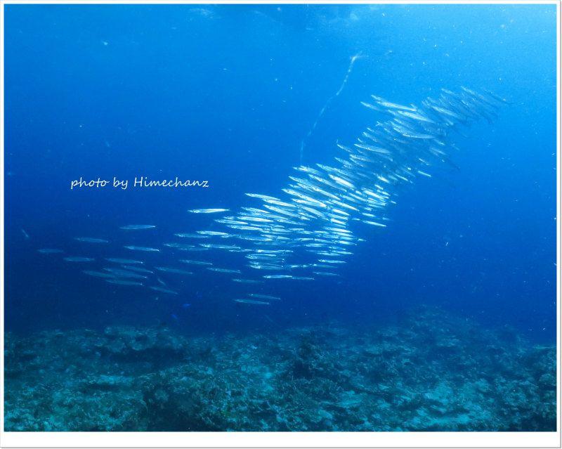 ホソカマスの群れ photo by CANON PowerShot S100