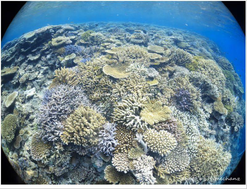 浜島東の極上サンゴ♪ photo by CANON PowerShot S100