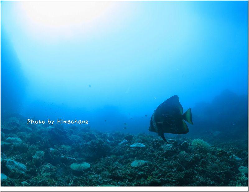 アカククリのクリーニングシーン photo by CANON PowerShot S100