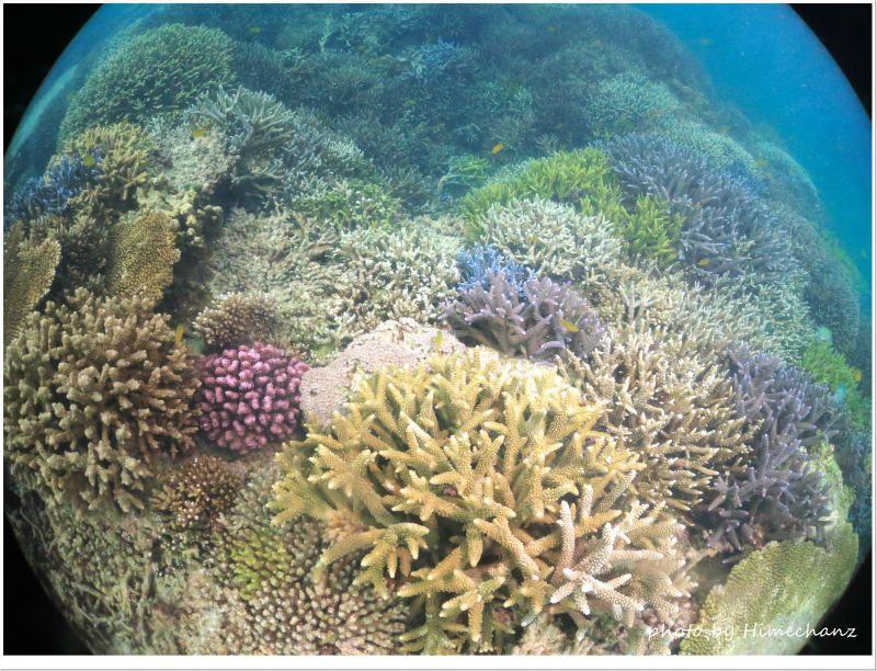 小浜島の極上サンゴ、無事でした! photo by CANON PowerShot S100