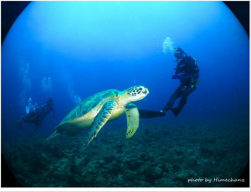 こっちに向かって泳いでくるんですけどぉ。。w photo by CANON PowerShot S100
