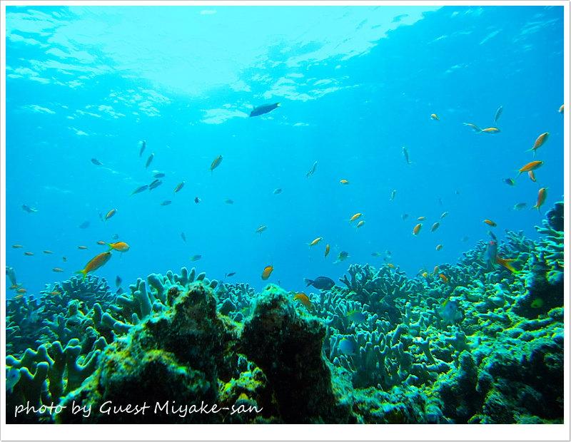 アカネハナゴイの群れ photo by SEA&SEA 1G