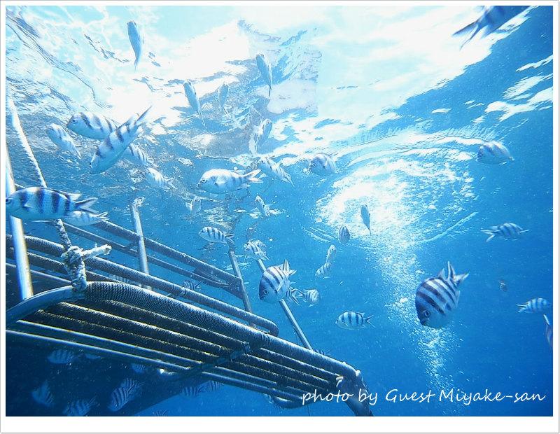 ロクセンスズメダイの群れ photo by SEA&SEA 1G