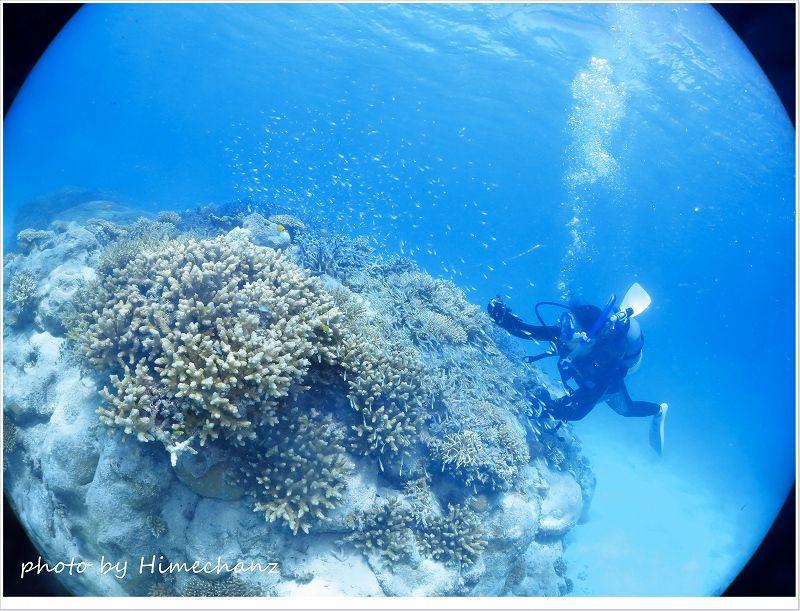 サンゴに小魚がいっぱい群れてましたね! photo by CANON PowerShot S100
