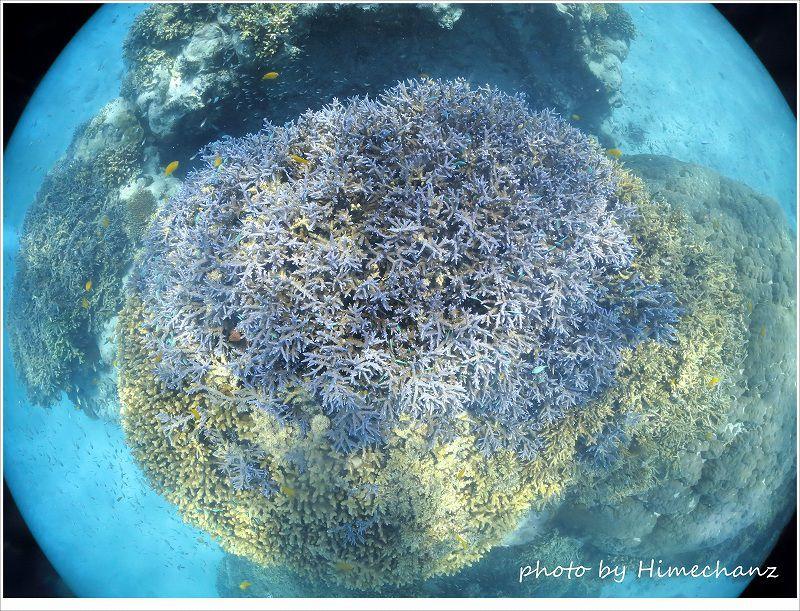 極上サンゴに癒されました♪ photo by CANON PowerShot S100