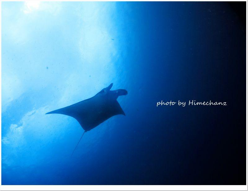波が穏やかだから、マンタが翔んでるように見えますね! photo by CANON PowerShot S100