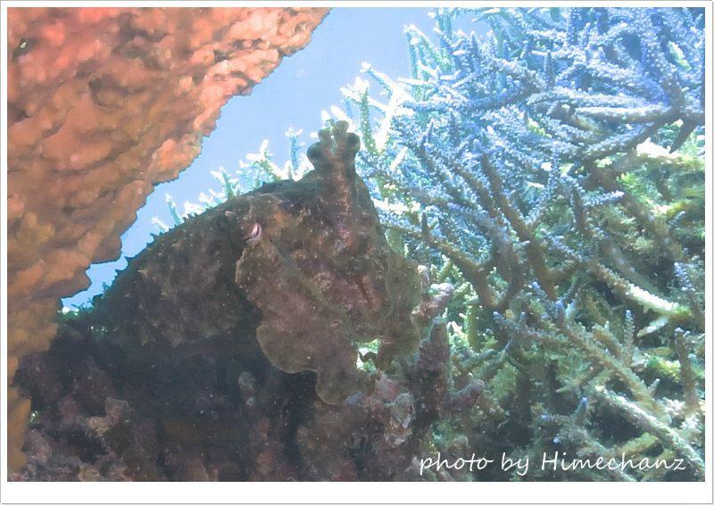 コブシメのおこちゃま photo by CANON PowerShot S100