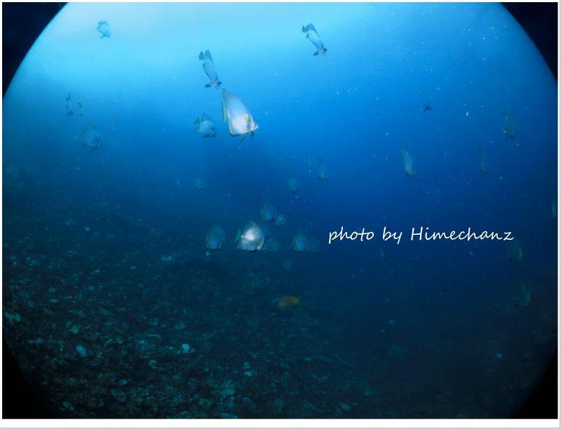 アカククリの群れ photo by CANON PowerShot S100