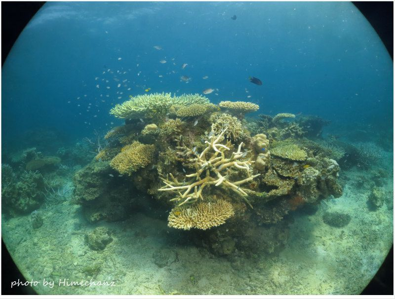 独特のサンゴの景色に癒やされました♪ photo by CANON PowerShot S100