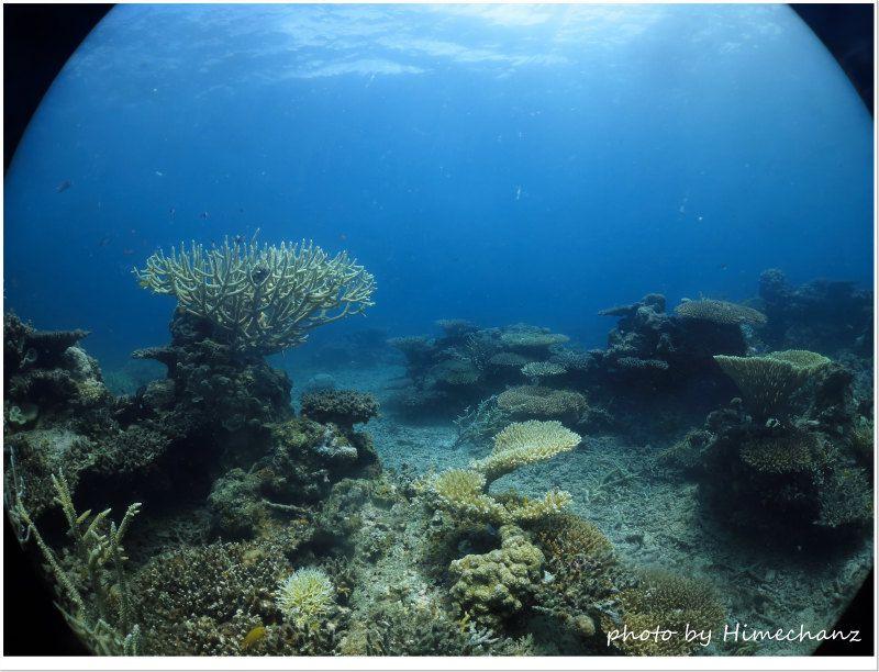 まだまだ元気なサンゴが居てくれました♪ photo by CANON PowerShot S100