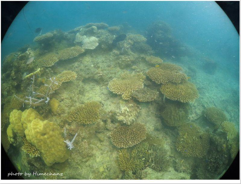 若いサンゴがいっぱい♪ photo by CANON PowerShot S100