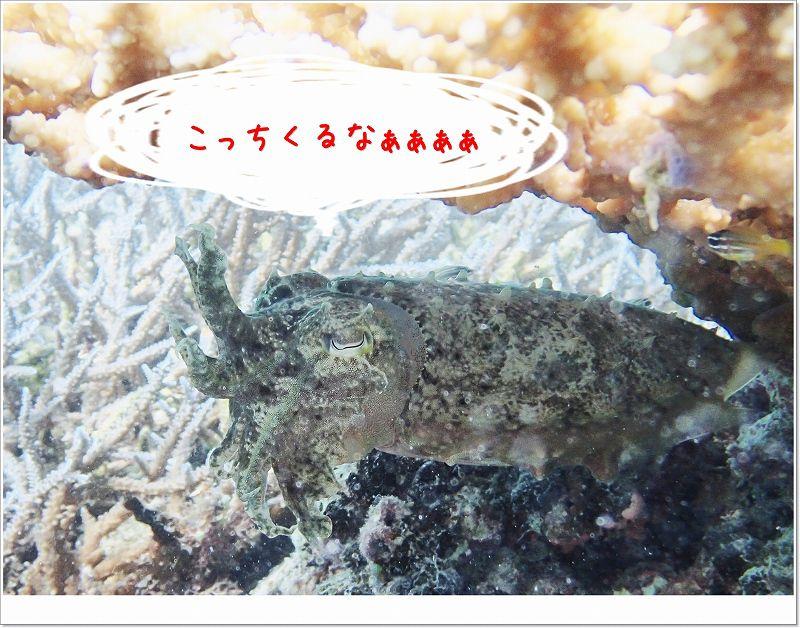 オコブ発見 photo by OLYMPUS STYLUS TG-2 Tough