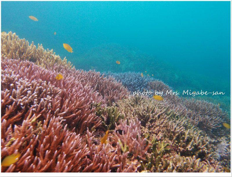 極上サンゴ photo by OLYMPUS XZ-1