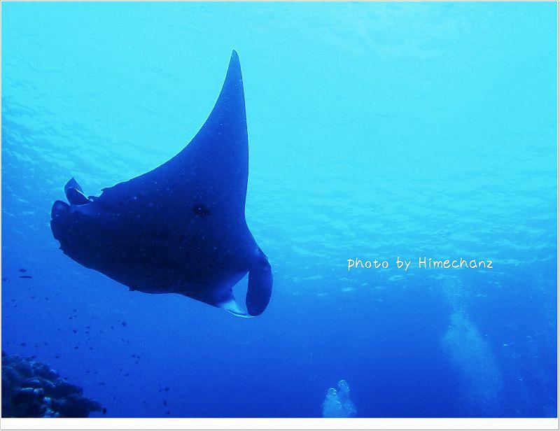 近く!てか、後ろを泳いできました! photo by OLYMPUS STYLUS TG-2 Tough