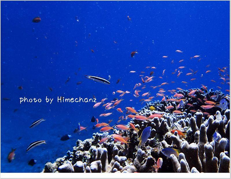 サンゴゾーンはやっぱり美しい photo by OLYMPUS STYLUS TG-2 Tough