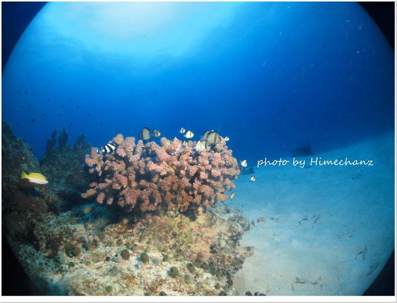 竹富島の若いサンゴが元気! photo by CANON PowerShot S100