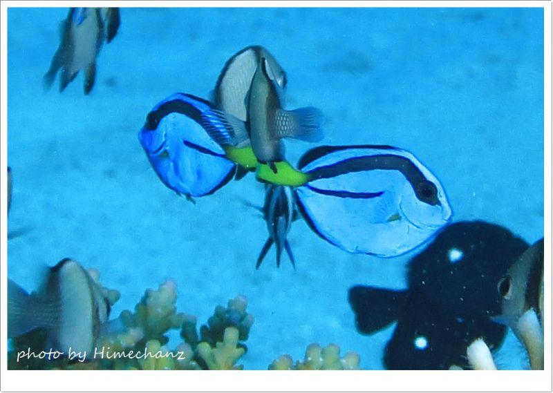 「Just keep swimming! ! 」って歌ってるように見えたw ペアで居着いてくれるといいんですが♪ photo by CANON PowerShot S100