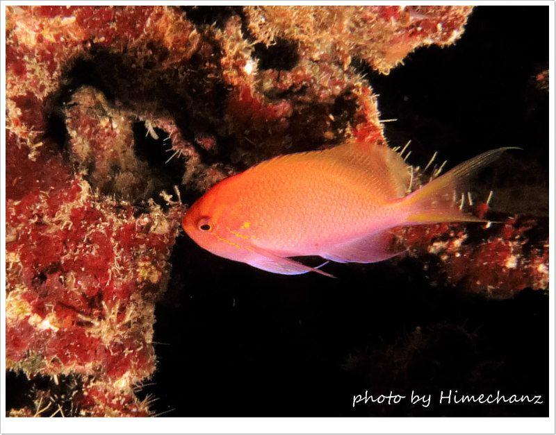 ハナゴンベ photo by CANON PowerShot S100