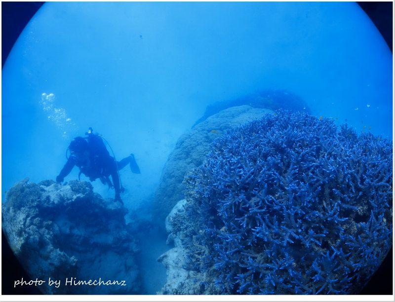 極上の青いサンゴ♪ photo by CANON PowerShot S100