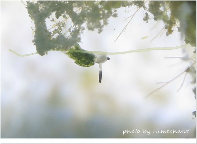 極小過ぎるクサイロモウミウシ photo by CANON PowerShot S100