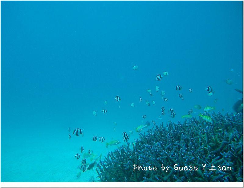 熱帯魚が乱舞する海! photo by Sea&Sea 1G