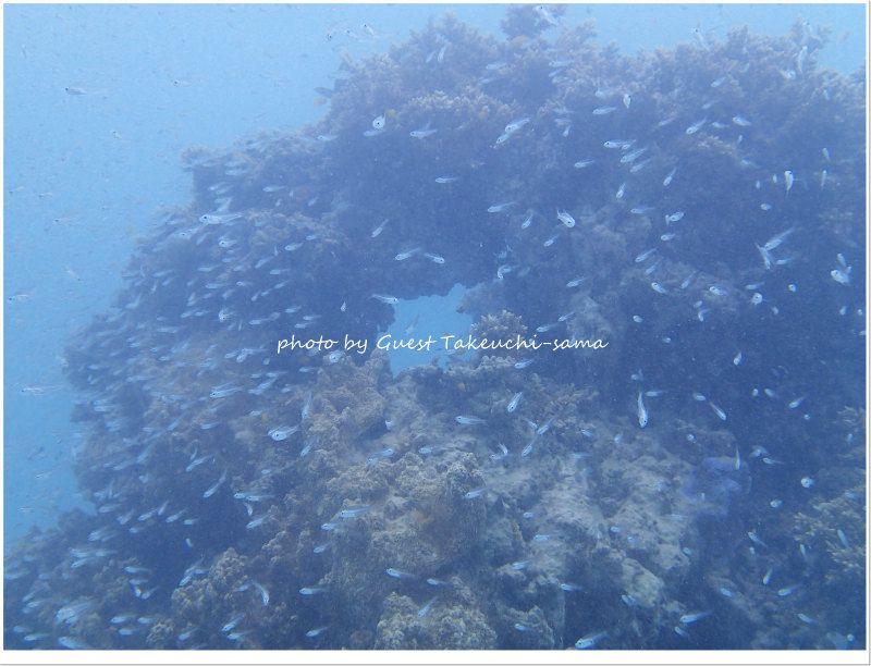 スカシテンジクダイの群れはまだまだ健在! photo by OLYMPUS STYLUS TG-2 Tough
