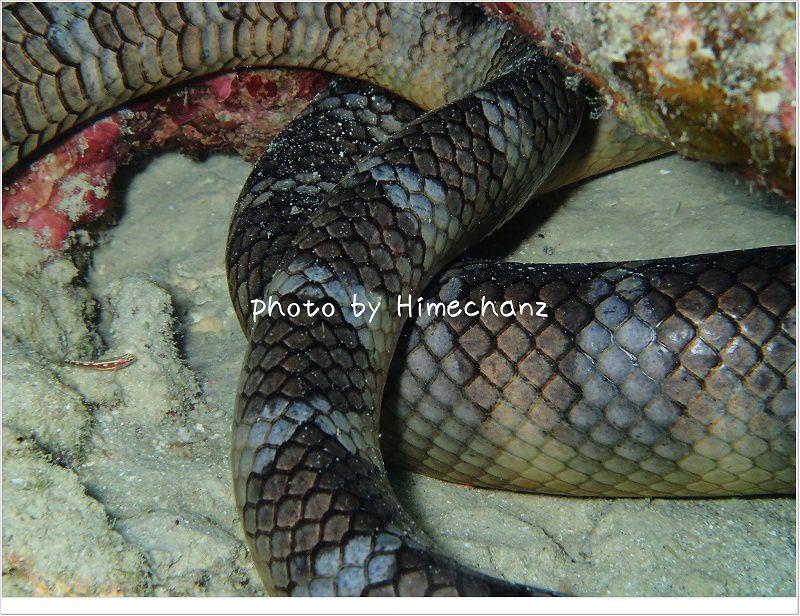 お休み中?ウミヘビ photo by OLYMPUS STYLUS TG-2 Tough