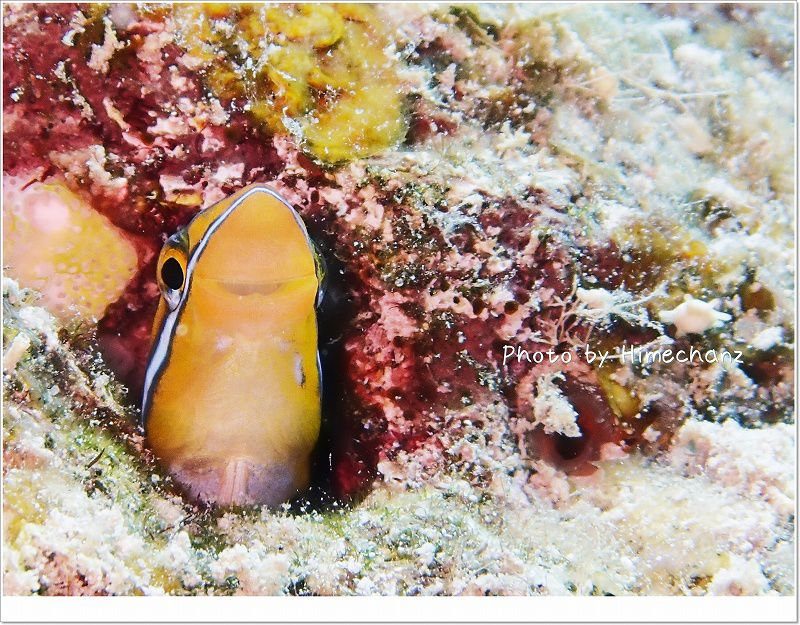 ミナミギンポ photo by OLYMPUS STYLUS TG-2 Tough