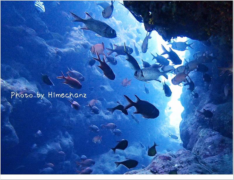 亀裂には魚たちがいっぱい!! photo by OLYMPUS STYLUS TG-2 Tough