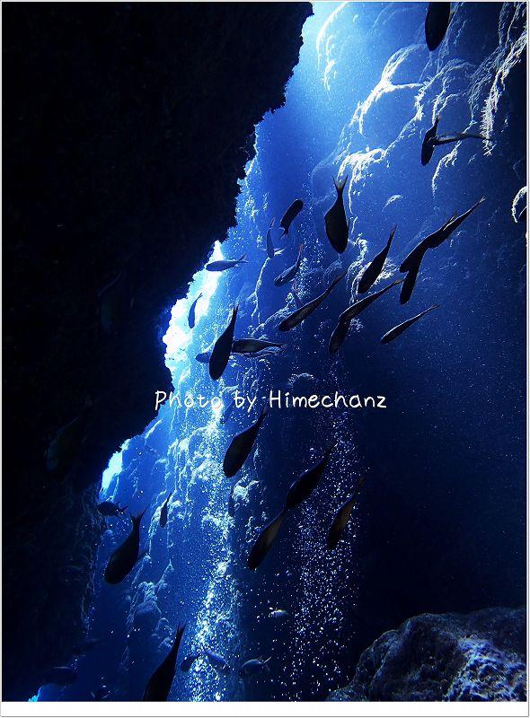 魚たちもが美しく輝きます photo by OLYMPUS STYLUS TG-2 Tough